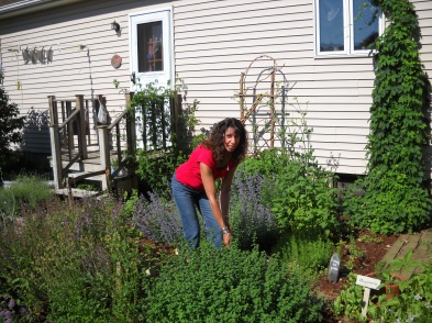 harvesting herbs in Northford