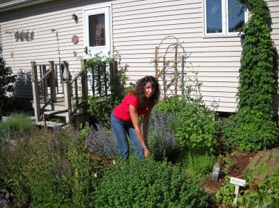 harvesting herbs in Northford